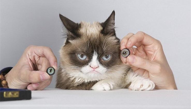 由于一脸不爽的表情,这只小猫成为网络上最受欢迎的宠物之一.